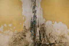 The old wall in the bathroom is covered with mold. Due to humidity in the room stock photos