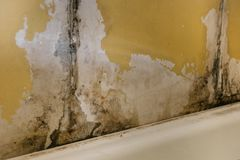 The old wall in the bathroom is covered with mold. Due to humidity in the room royalty free stock photos