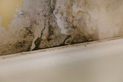 The old wall in the bathroom is covered with mold. Due to humidity in the room royalty free stock photo