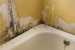 The old wall in the bathroom is covered with mold. Due to humidity in the room royalty free stock image