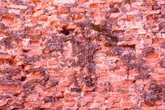 Old wall of brick as wallpaper. Old wall of brick. Wallpaper and background stock images