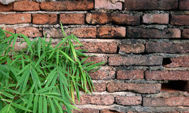 Old wall brick cracks and bamboo leaf art retro background Stock Image
