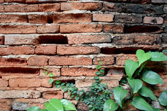 Old wall brick cracks and green leaf art retro background Stock Photo