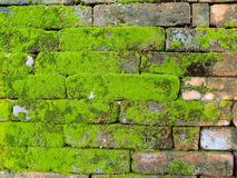 Old Wall brick with moss Stock Image