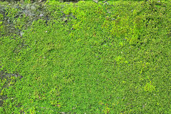 Old Wall Brick With Moss Royalty Free Stock Photo