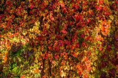 Autumn `queen` of collors royalty free stock image