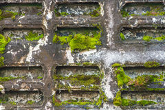Old wall. Old Concrete wall with moss Stock Photo