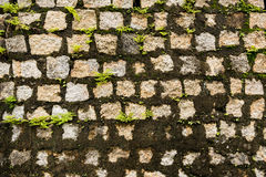 Old wall covered with moss background texture pattern Stock Photos
