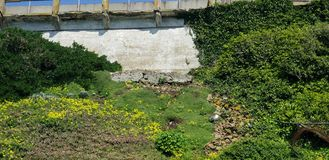 An old wall covered with vegetation stock images