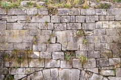 Old wall with cracks and wild plant growth stock photos