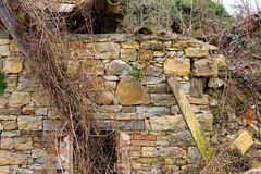 Old wall with creepers Stock Image
