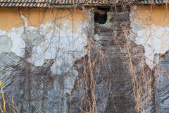 Old wall with dried herb. The wall of an old house, shriveled, where he grew a plant, dry it too Stock Photography