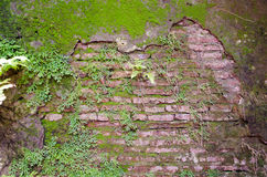 Old wall with fern and tropical plants stock photo