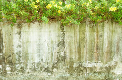 Old wall with flower Royalty Free Stock Photo