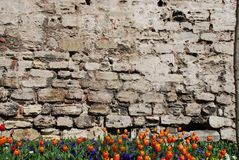 Old wall and flowers Stock Photography