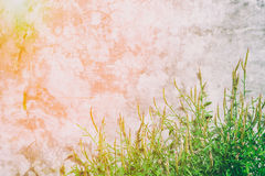 Old wall with grass and flare light, abstract texture background Stock Photos