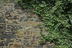 Old Wall with herbage. Old stone wall with bougainvillea canopy Royalty Free Stock Image