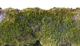 Old wall isolated fragment. Fragment of an old wall on which the moss and a lichen grows closeup isolated. Sunny day. With patch royalty free stock photo