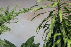 Wall made from concrete  behind green plants Stock Image
