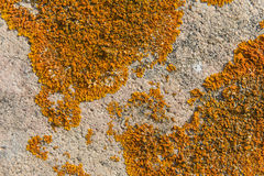 Old wall with moss Royalty Free Stock Image