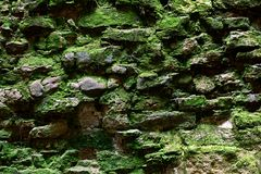 An old wall with moss Stock Images