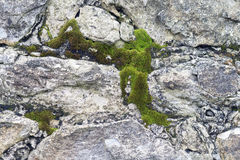 Old wall with moss Stock Photography