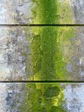 Old wall moss wet building Royalty Free Stock Image