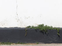 Old wall and plants Royalty Free Stock Photos