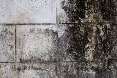 Old wall with plaster crashed Stock Image