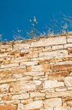 Old wall. Old stone wall with grass Royalty Free Stock Photo