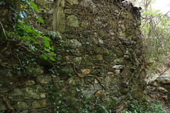 Old wall stone of a water mill. With lot's of tree roots Royalty Free Stock Images