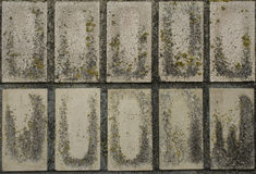 Old wall tiles. Texture of old mossy ceramic wall tiles Stock Photo