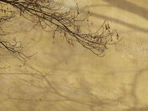 Old wall with tree branches Royalty Free Stock Photography