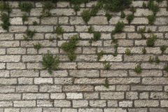 Old wall from a tufa with plants, background Stock Photo