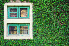 Old Wall With Window Overgrown with wild green plant Stock Images