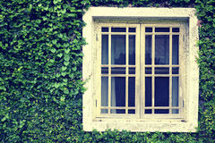 Old Wall With Window Overgrown with wild green plant Royalty Free Stock Images