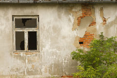 Old wall with window and shrub Stock Image