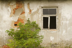 Old wall with window and shrub Stock Photography