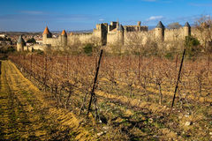 Old walled citadel and vinyards. Carcassonne. France Stock Photo