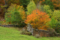 Old walls in autumn Stock Photos