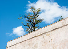 Old walls and tree Royalty Free Stock Image