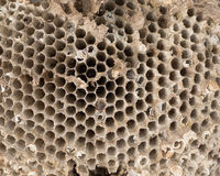 Old wasp nest Royalty Free Stock Photography
