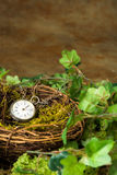 Old watch in nest Stock Photos