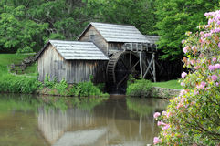 Old water mill. By pond with pink wildflowers royalty free stock photos