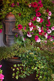 Old Water Pump with Flowers Stock Photos