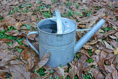 Old watering can in autumn leaves Royalty Free Stock Image