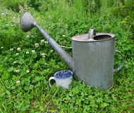 Old watering can with cup of berry Stock Photography