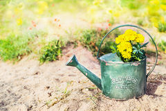 Old watering can with flowers in garden Stock Photo