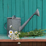 Old watering can with flowers on green planks Royalty Free Stock Photos