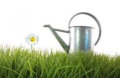 Old watering can in grass Stock Photo